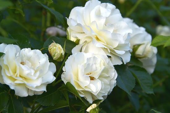 ceres-kwiaciarstwo-kategoria-produktów